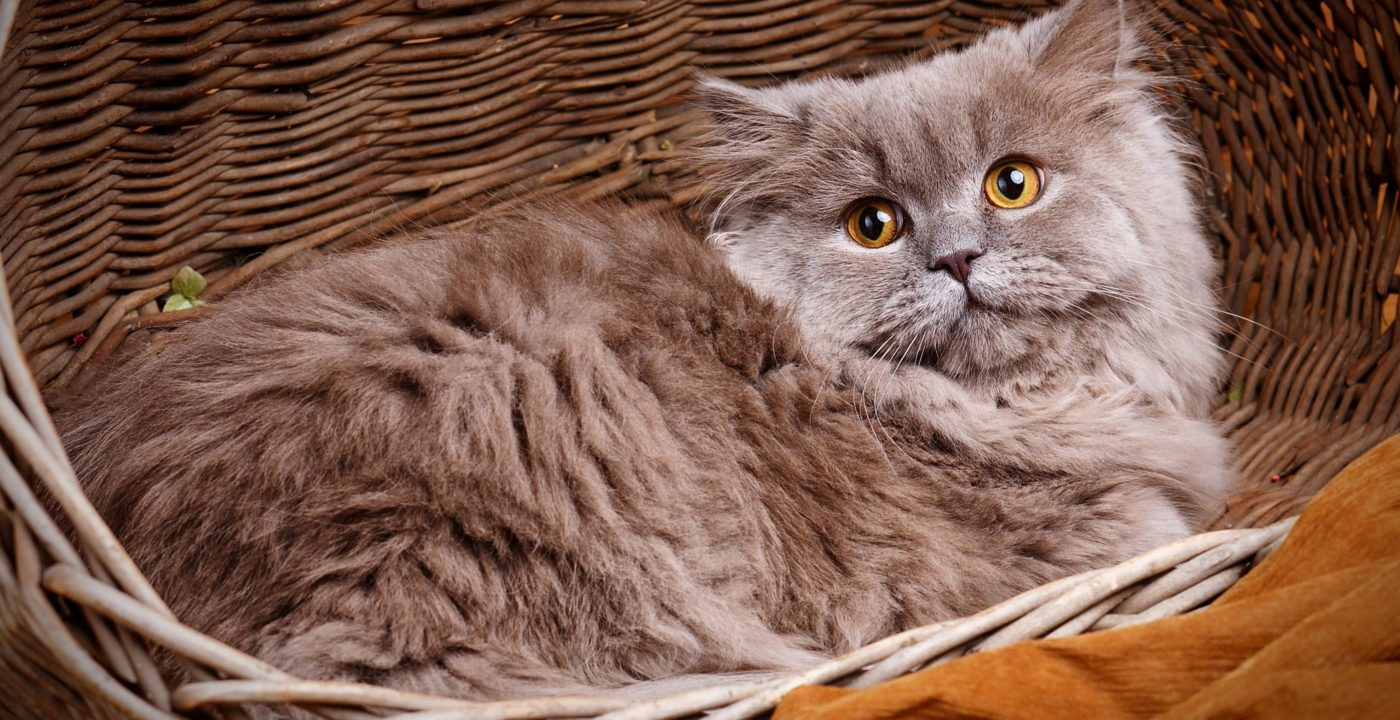Catskingdom Mobile Cat Grooming In Surrey And South West London